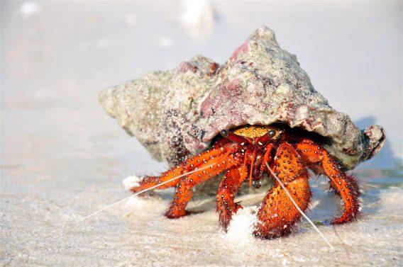 Jak rosną kraby i co to ma wspólnego z doświadczeniem na sali szkoleniowej?